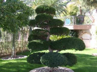 Création de jardin et plantation