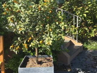 Installation de pot avec plante - Copropriétés - Communes Var et Alpes Maritimes
