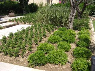 Plantation de végétaux