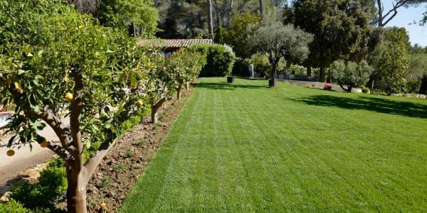 Lawn turf installation