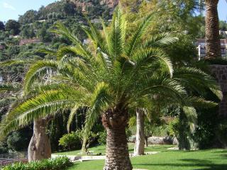 Taille de palmier- Var et Alpes Maritimes - Exo Jardins