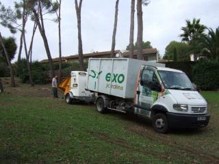 Taille et élagage d'arbres - Exo Jardins