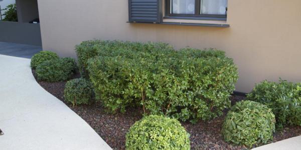 Garden maintenance - Gardening