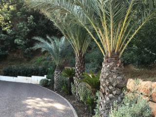 réalisation d'accès en pavés pour un jardin dans le Var - Paysagiste Exo jardins