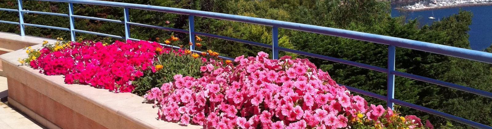 Création de jardinière de balcon et terrasse