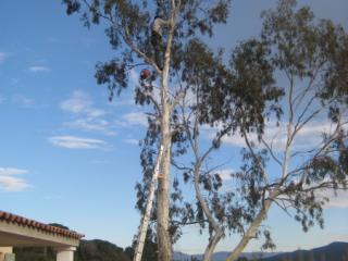 Elagage d'arbre toutes hauteurs - Nice - Cannes - Frejus - Exo Jardins