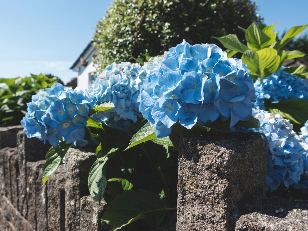 Plantations de végétaux - Jardin paysager - Paysagiste jardinier Exo Jardins