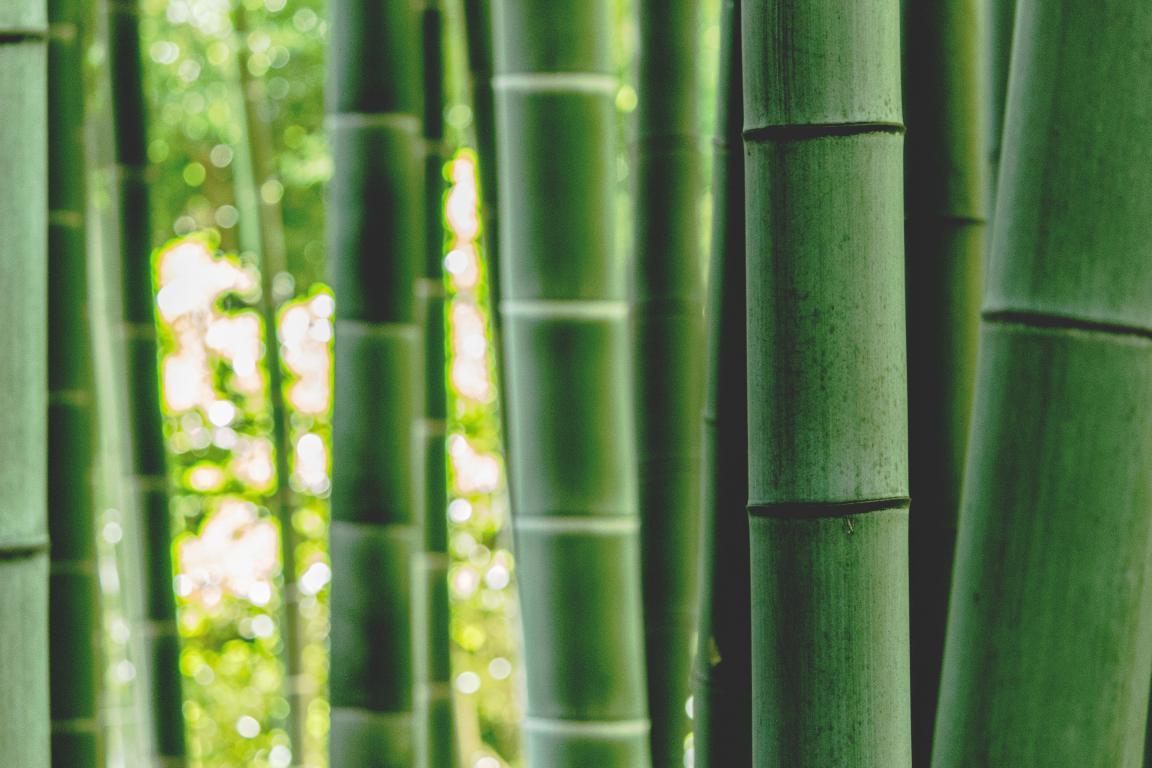 Bambous - Jardin zen jardin japonais- Exo Jardins