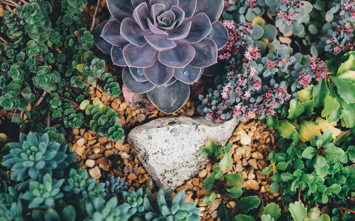 Jardin aménagement plantations - Var et Alpes Maritimes - Jardinier paysagiste Exo Jardins