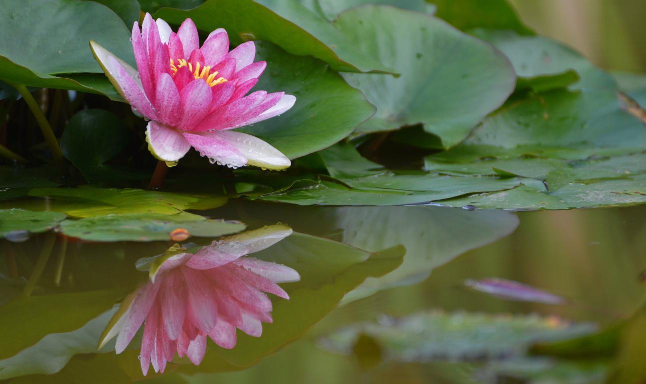 Jardin zen - Bassin étang - milieu aquatique - Exo Jardins